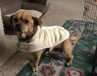 Foster Dog Zumba